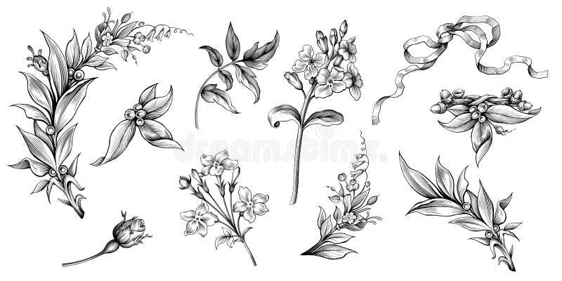 Kwiatu rocznika ślimacznicy wiktoriański ramy granicy kwiecistego ornamentu wzoru retro różanego laurowego tatuażu Barokowy grawe royalty ilustracja