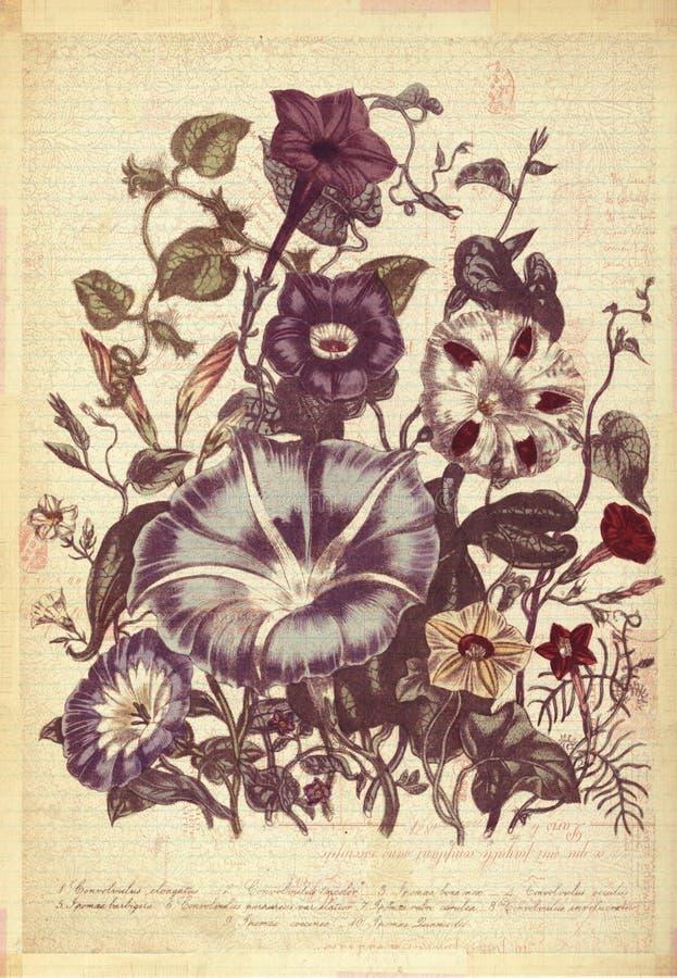 Kwiatu rocznika stylu ściany Botaniczna sztuka z Textured tłem royalty ilustracja