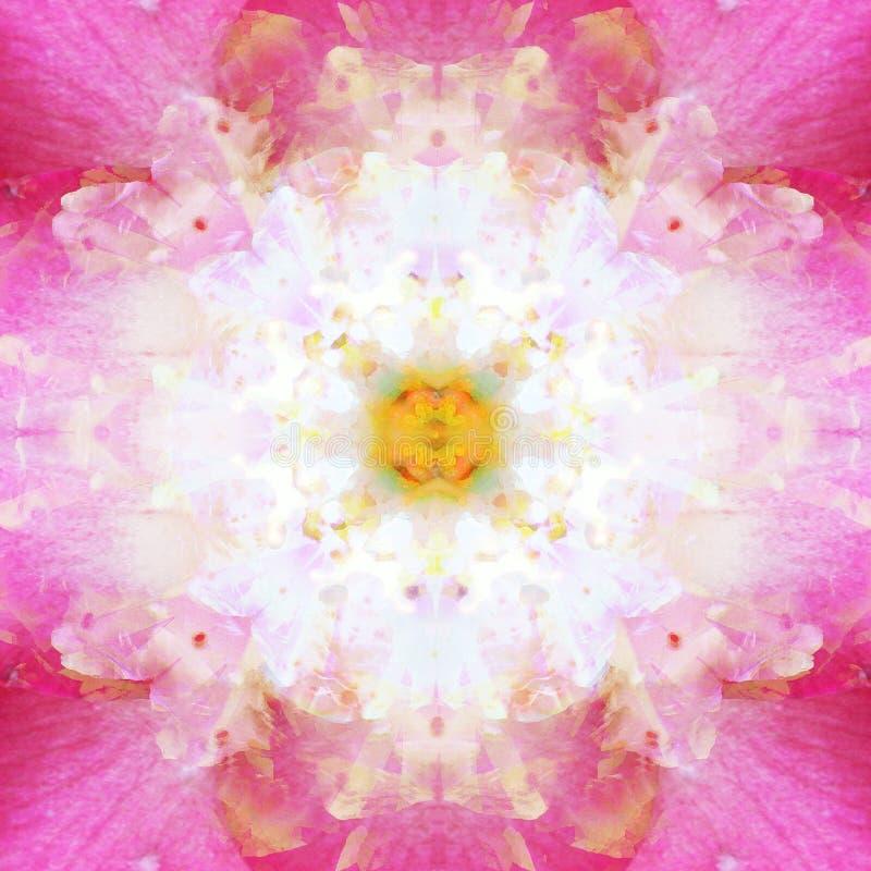 KWIATU ROMANTYCZNY mandala W fuksji, rocznika, RETRO, ROMANTYCZNEGO I LEKKIEGO bielu centrum kwiacie, ABSTRAKCJONISTYCZNY tło W f ilustracji