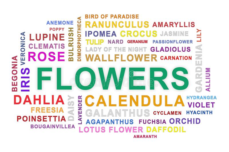 Kwiatu słowa chmura ilustracji