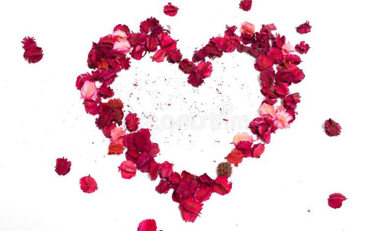 Kwiatu serca odosobnienie fotografia royalty free