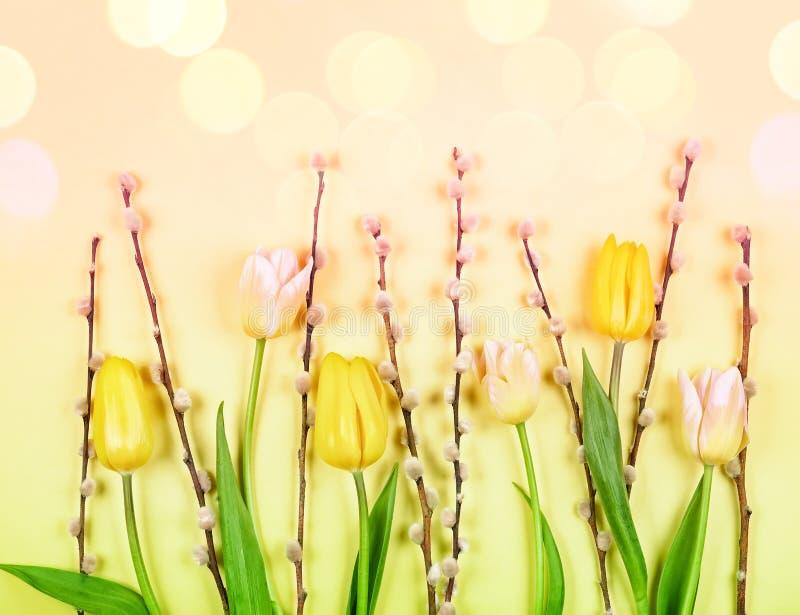 Kwiatu skład z tulipanami i gałąź kici wierzba na żółtym tle zdjęcie royalty free