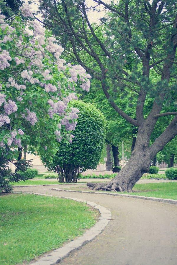 Kwiatu sposób zdjęcia royalty free