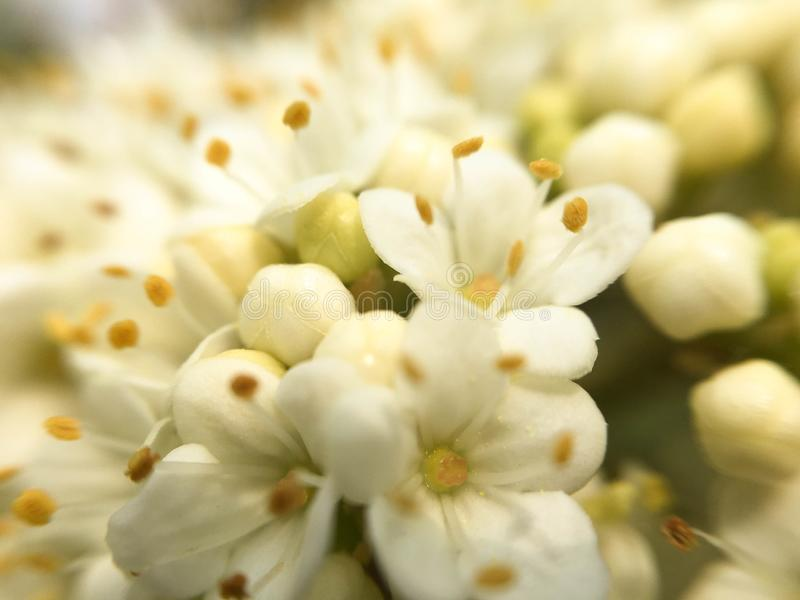 Kwiatu strza?u makro- wiosna zdjęcia royalty free