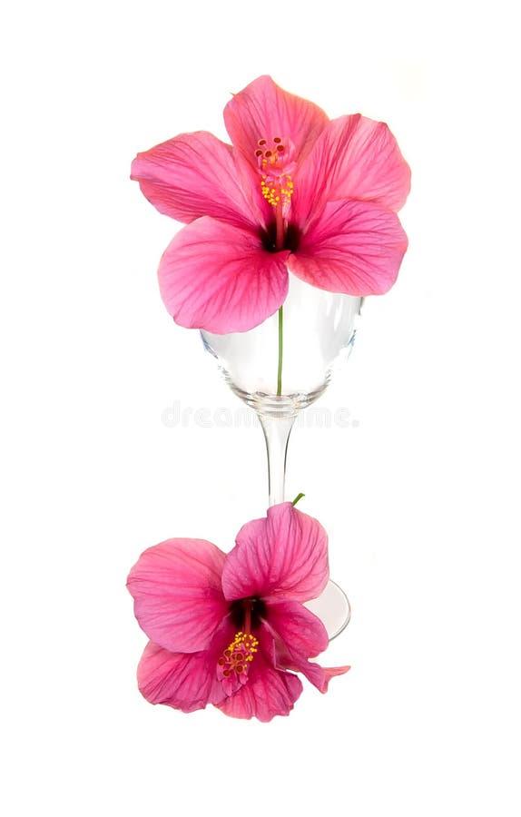 kwiatu szkła czerwień zdjęcie stock