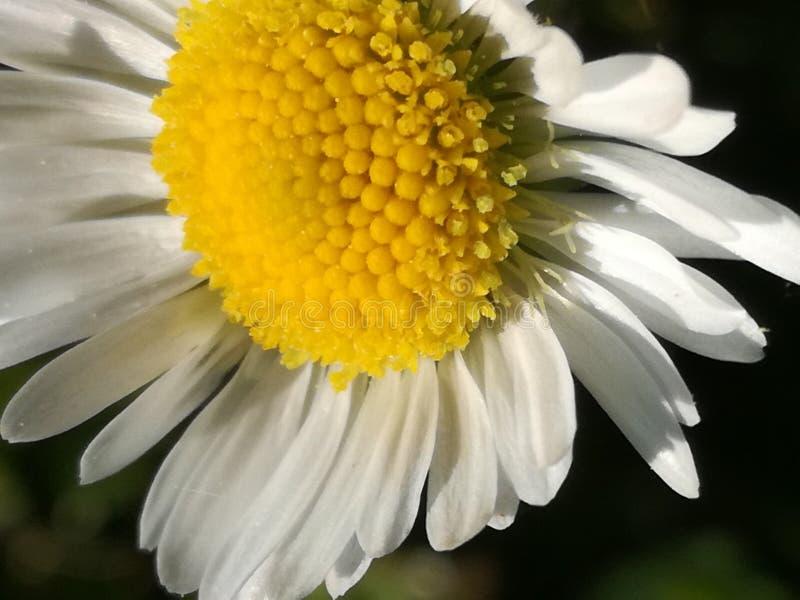 kwiatu trochę biel obraz stock