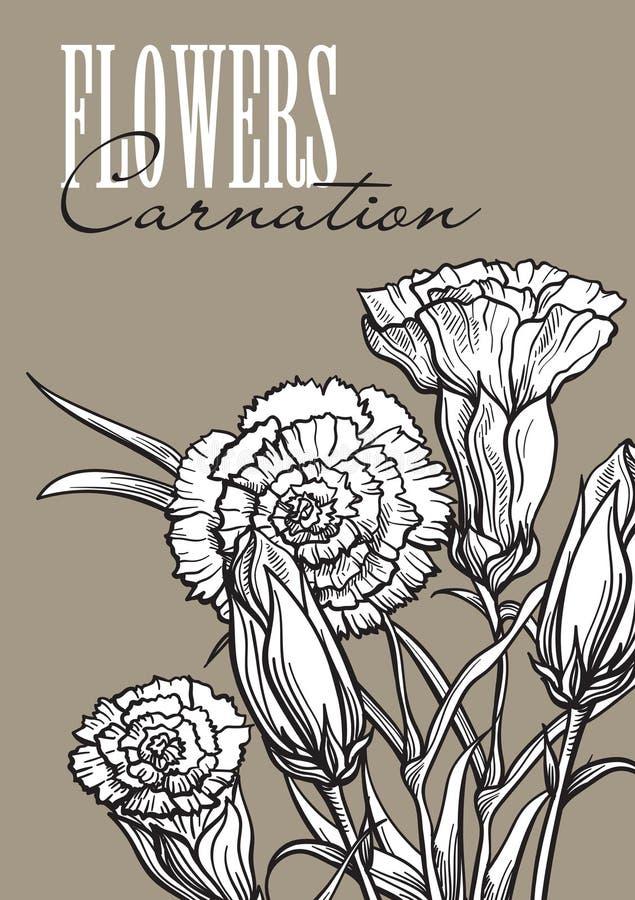 Kwiatu ustalony goździk ilustracja wektor
