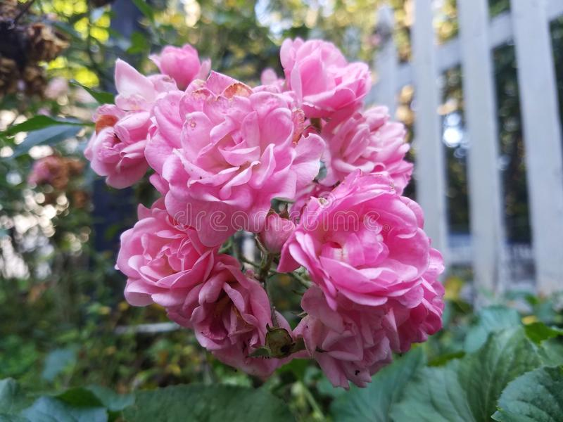Kwiatu w połowie lato zdjęcia stock
