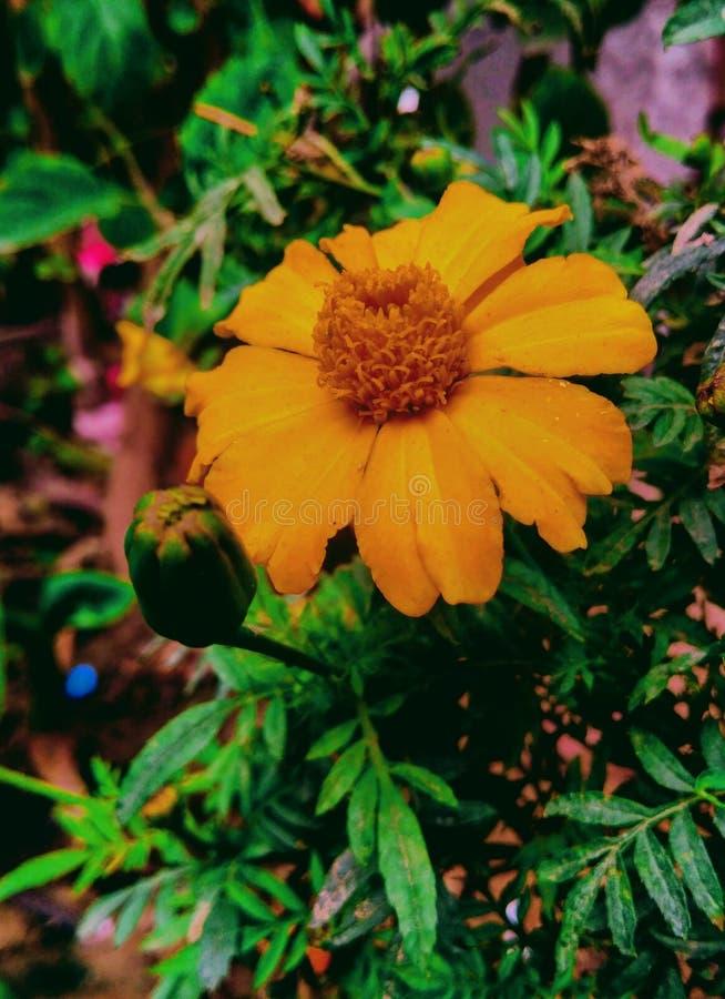Kwiatu wizerunek zdjęcie royalty free