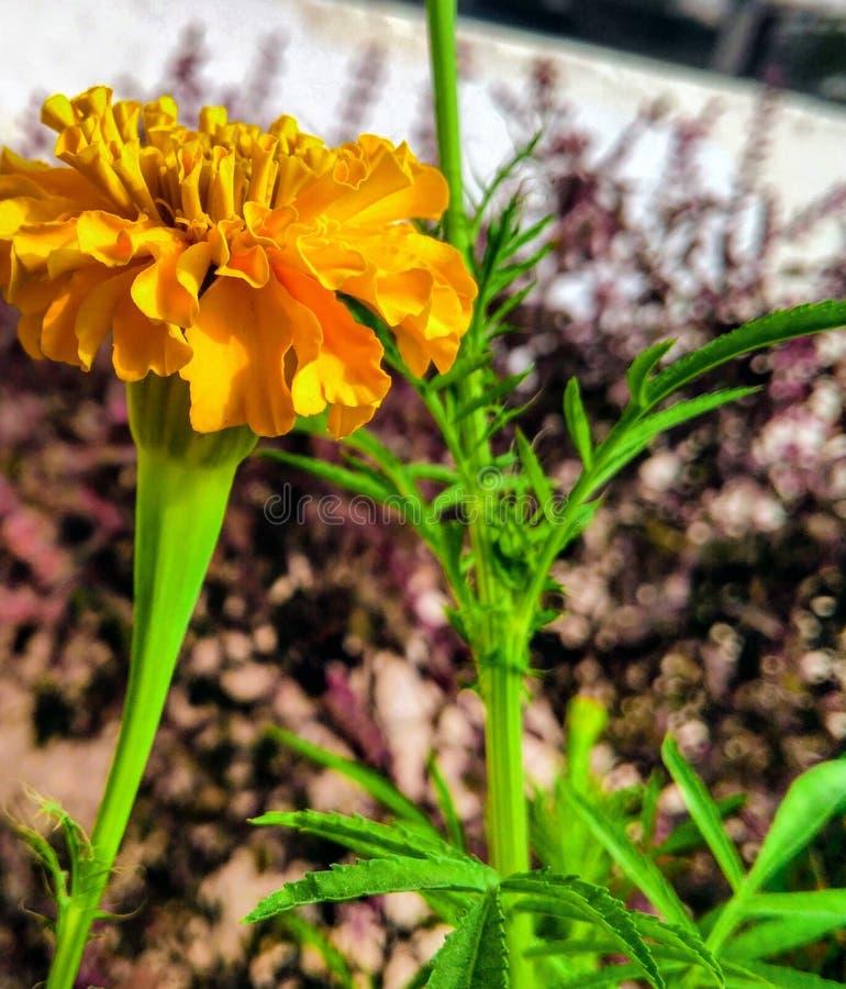 Kwiatu wizerunek zdjęcia stock