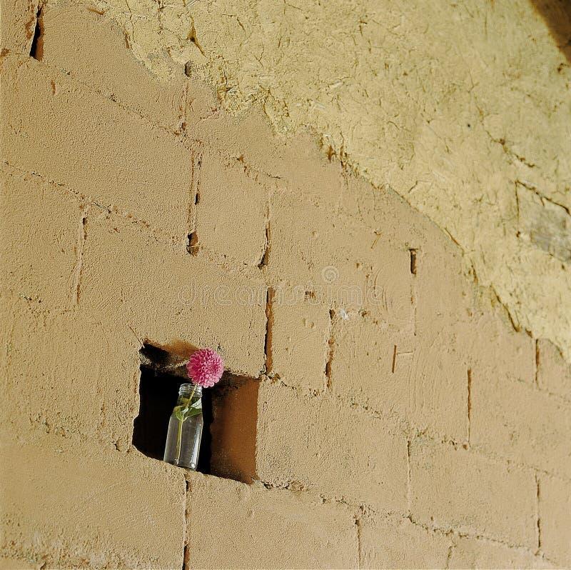Kwiatu wizerunek zdjęcie stock
