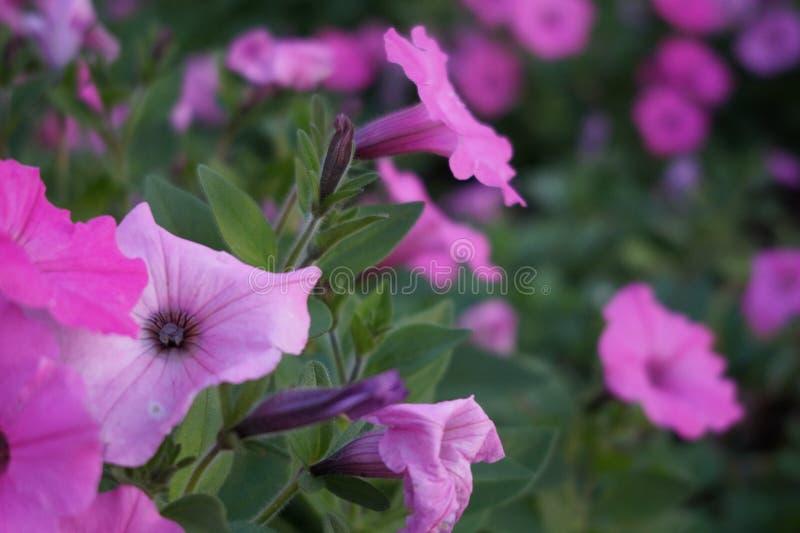 Kwiatu wsad obrazy royalty free