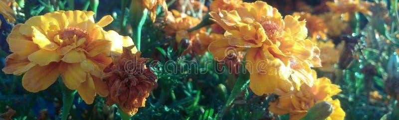 Kwiatu wschód słońca zdjęcie stock