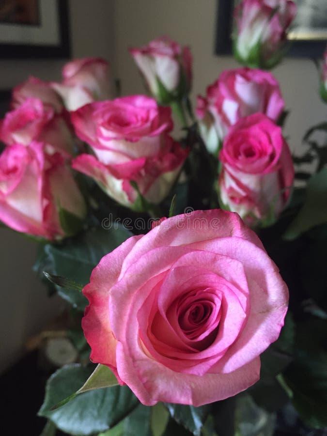 Kwiatu zakończenie zdjęcia royalty free
