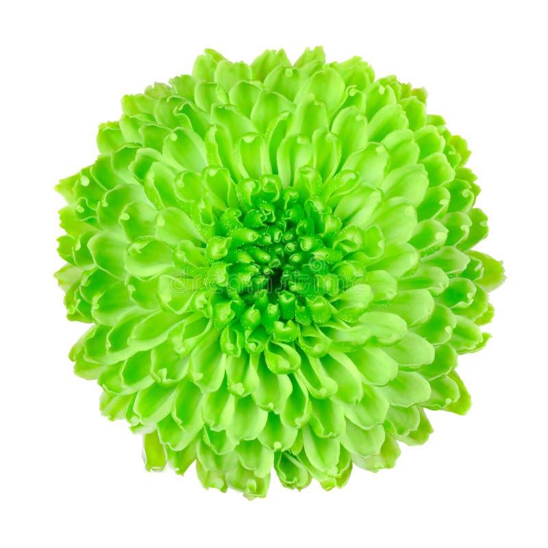 kwiatu zieleń odizolowywający wapna pom biel obraz royalty free