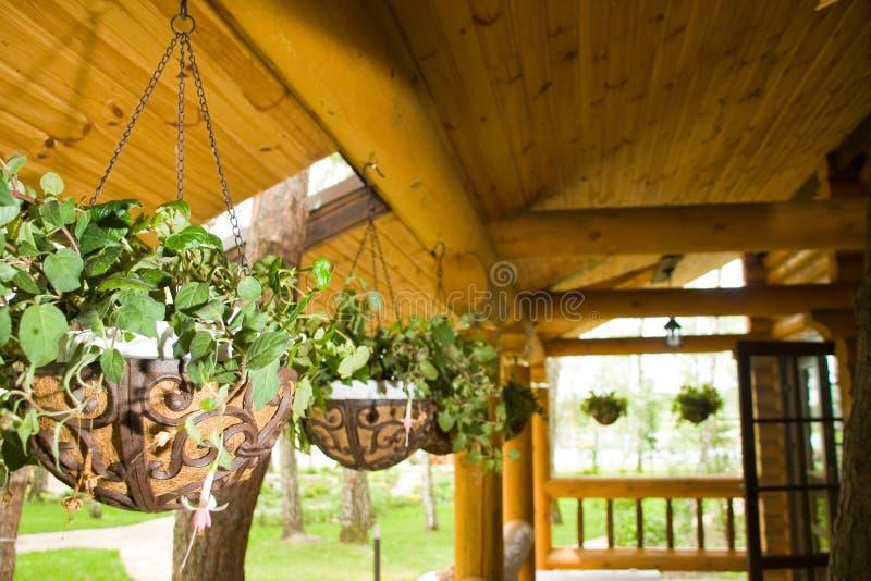 kwiatu zieleni rośliien garnki zdjęcia stock
