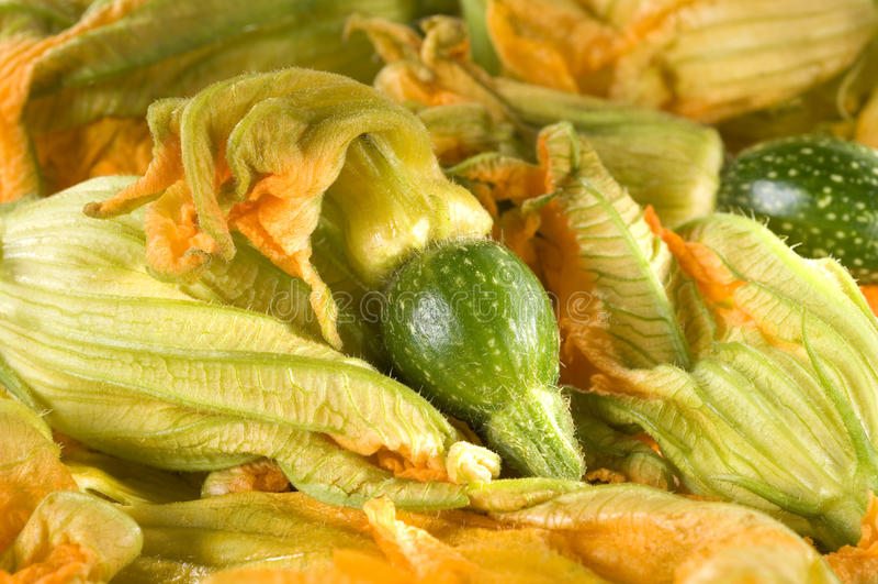 kwiatu zucchini obrazy stock