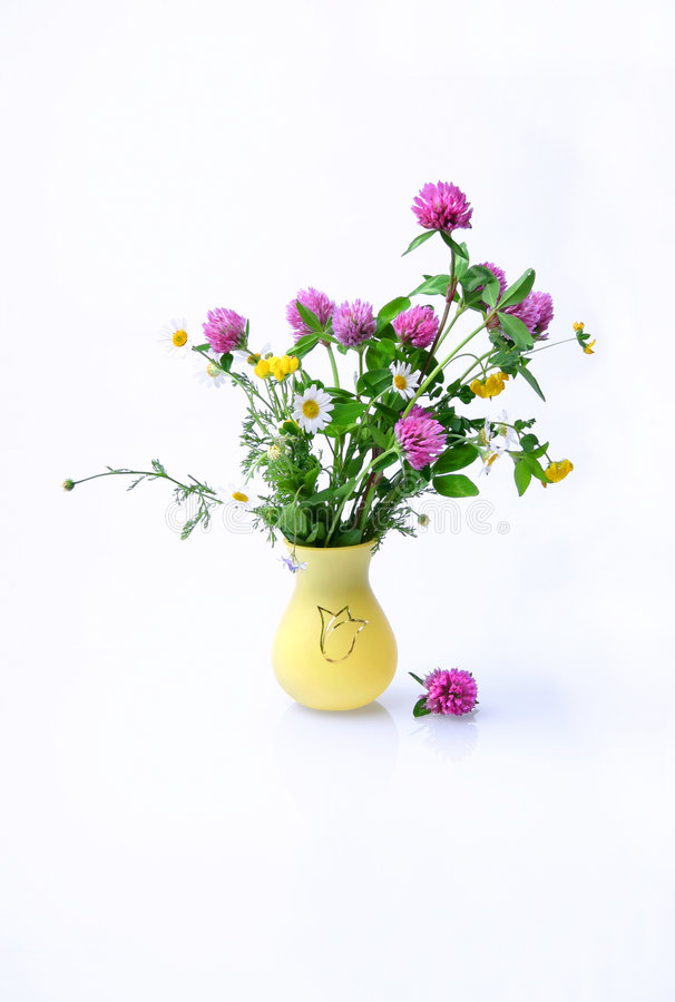 kwiaty łąkę zdjęcie stock
