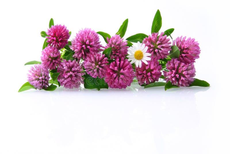 kwiaty łąkę fotografia royalty free