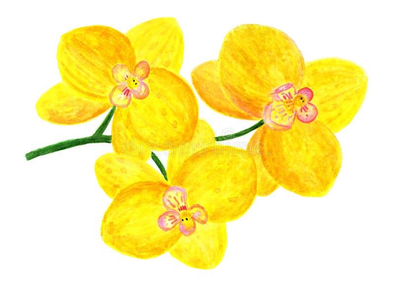 Kwiaty żółta orchidea beak dekoracyjnego latającego ilustracyjnego wizerunek swój papierowa kawałka dymówki akwarela ilustracji