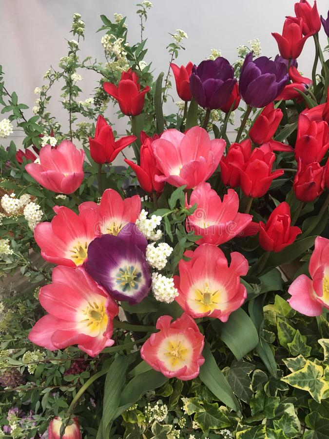 Kwiaty obraz royalty free