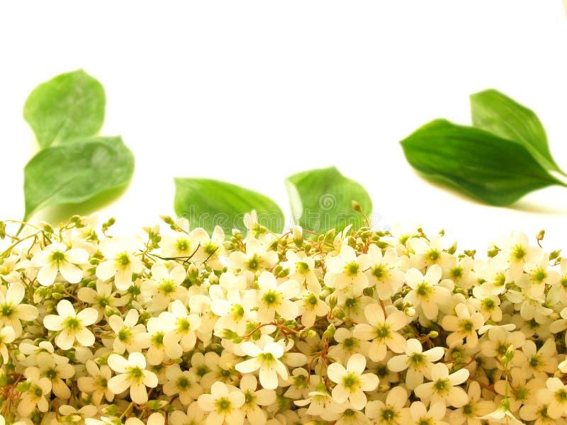 Download Kwiaty zdjęcie stock. Obraz złożonej z kwiaty, ziarna, tło - 131464