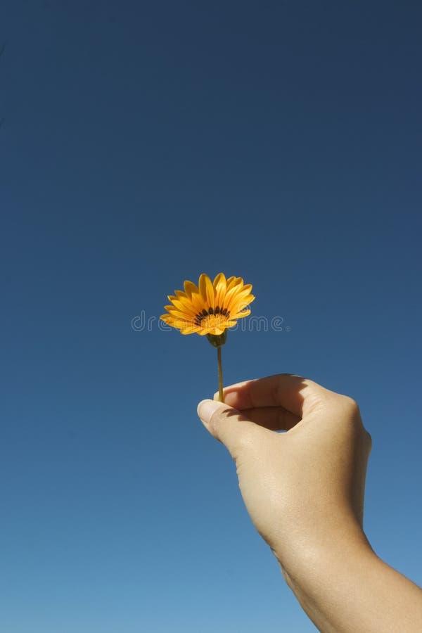 Download Kwiaty, zdjęcie stock. Obraz złożonej z miłość, yellow - 143740