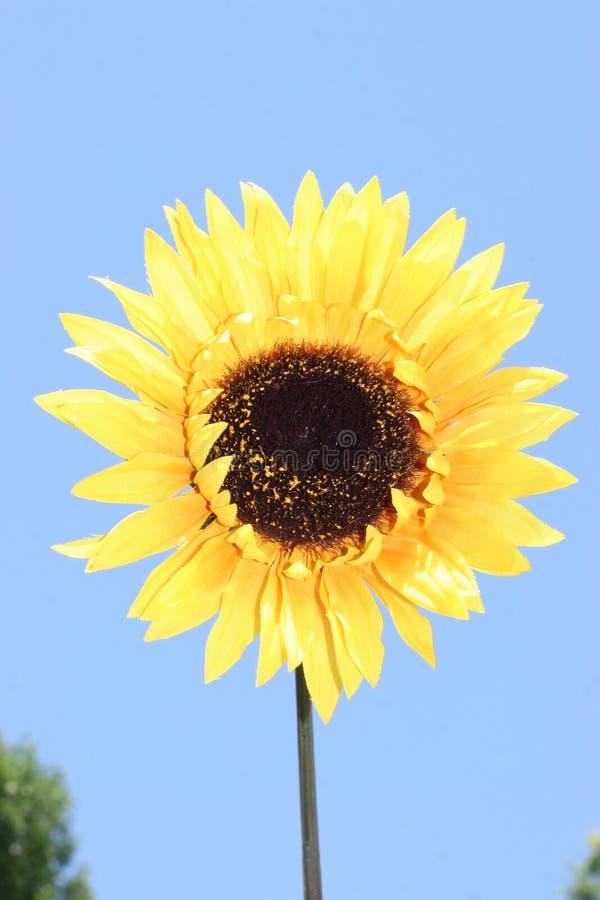 kwiaty 4 żółty obraz royalty free