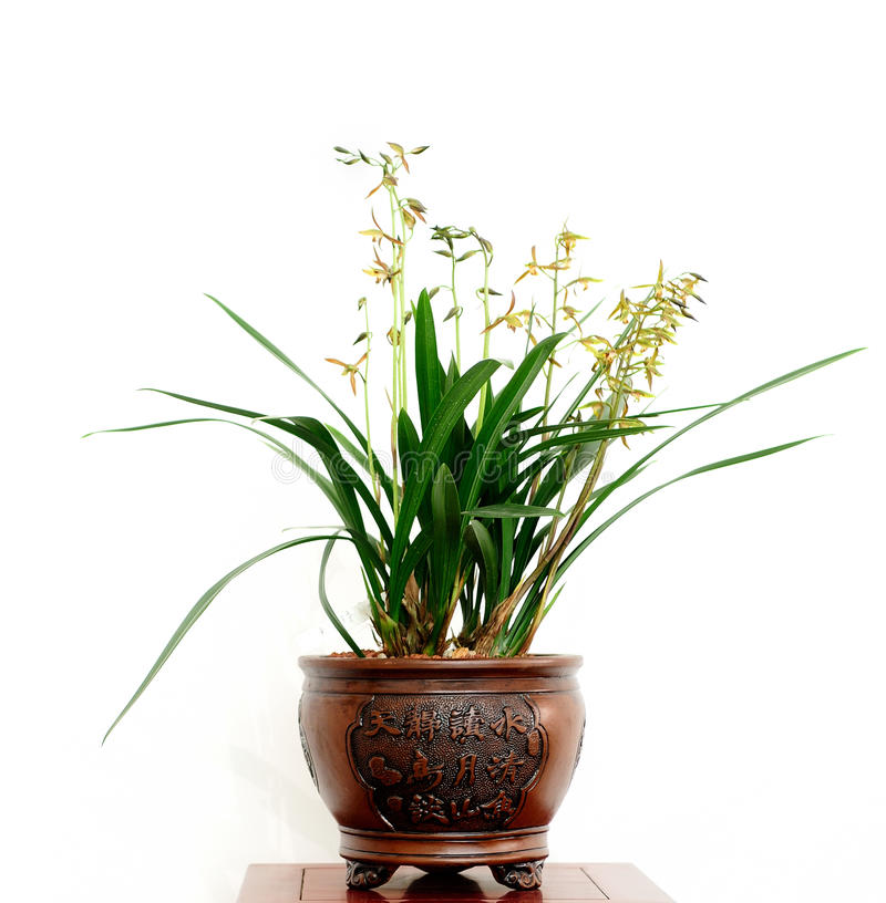 Download Kwiaty zdjęcie stock. Obraz złożonej z kwiat, abstrakt - 42525626
