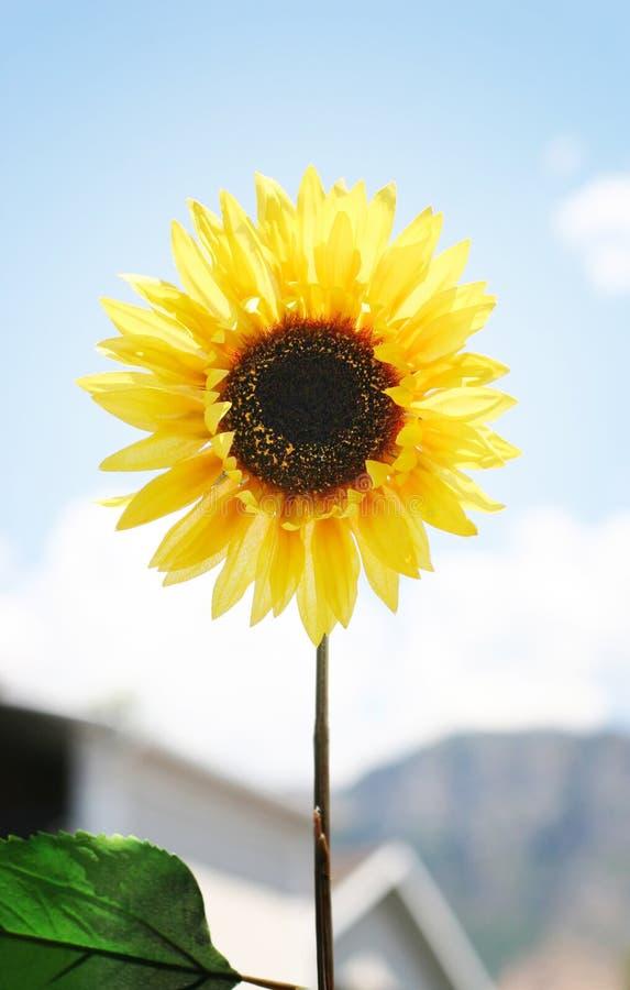 kwiaty 5 żółty zdjęcie stock