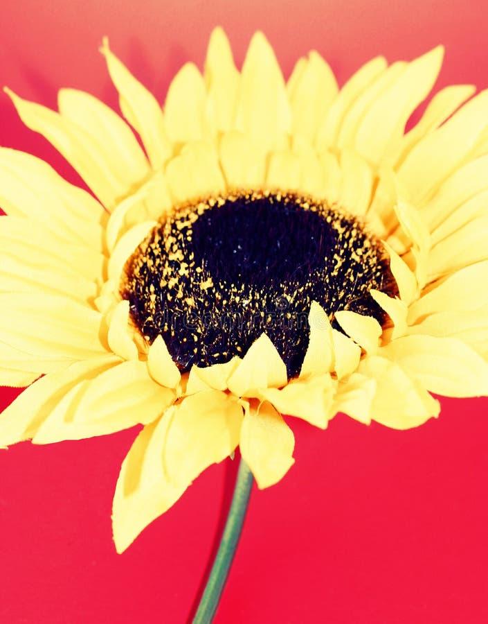 kwiaty 7 żółty obrazy royalty free