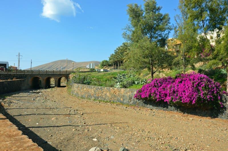 Kwiaty amarantowe na krawÄ™dzi suchej rzeki zdjęcia stock