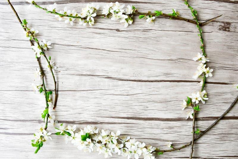 kwiaty azalii blisko dof płytkie pojawi się kwiat obraz royalty free