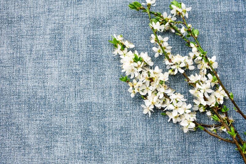 kwiaty azalii blisko dof płytkie pojawi się kwiat obrazy royalty free