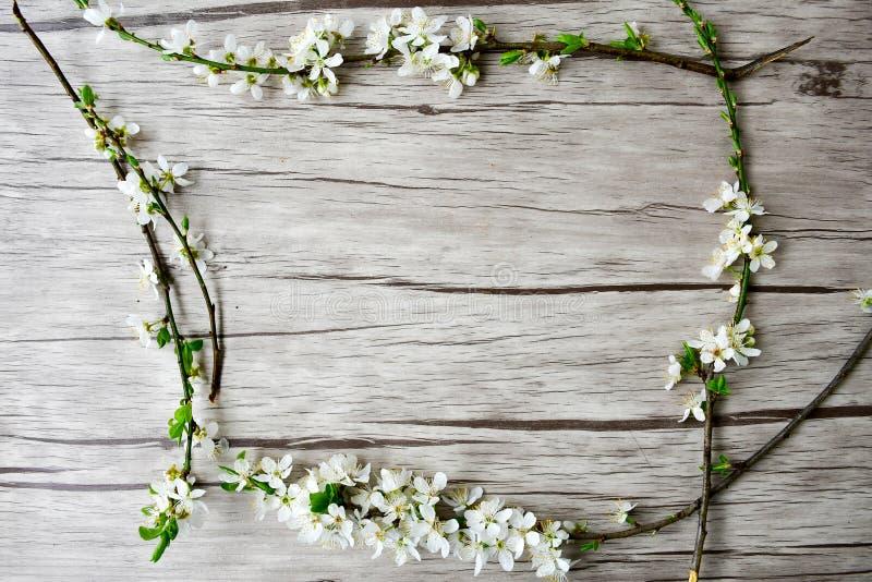 kwiaty azalii blisko dof płytkie pojawi się kwiat fotografia stock