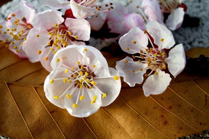 kwiaty azalii blisko dof płytkie pojawi się kwiat zdjęcie royalty free