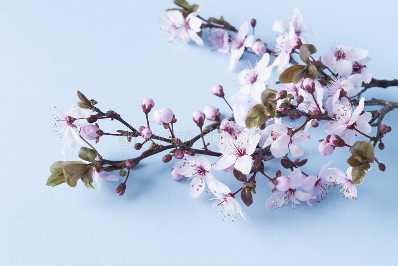 kwiaty azalii blisko dof p?ytkie pojawi si? kwiat obraz stock