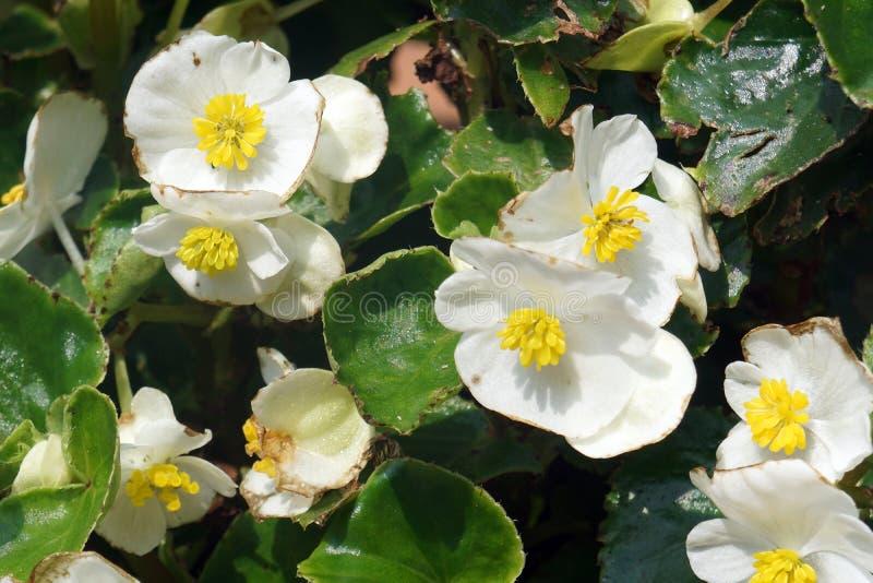 Kwiaty białe i żółte obraz stock