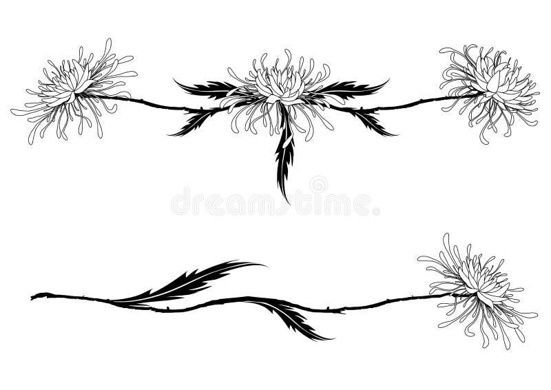 Kwiaty chryzantema ilustracji