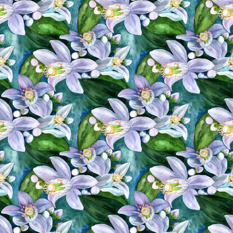 Kwiaty cytrusów drzewa - cytryna, pomarańcze, bergamota, wapno Bezszwowa tło grafika akwarela ilustracji