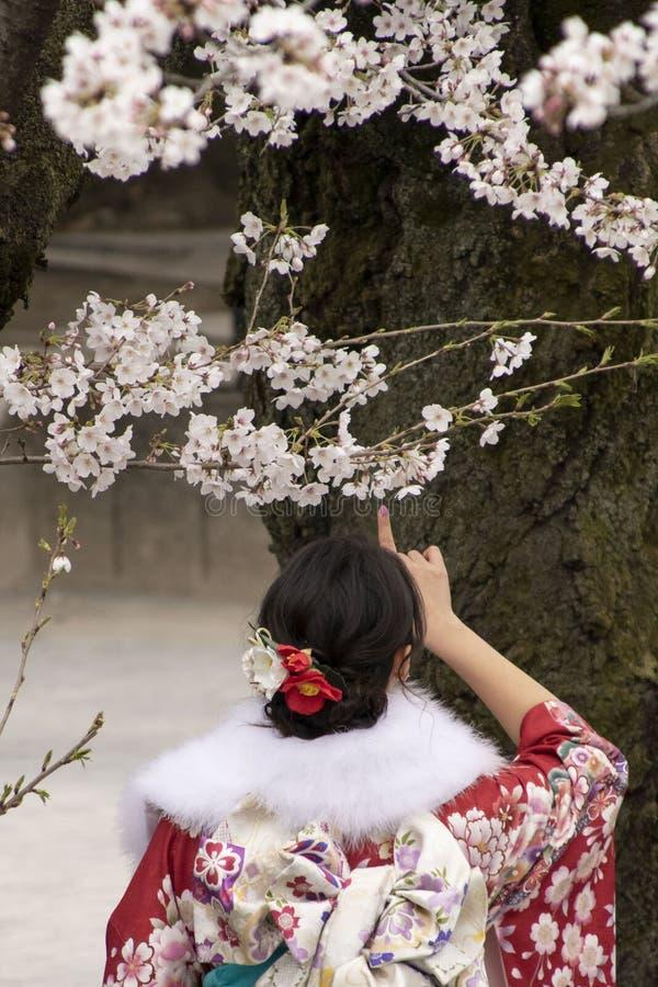 kwiaty czereśniowego Tokio obrazy stock