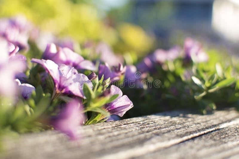 Kwiaty, czerwień, menchia, purpury, wszystkie splendor zdjęcia royalty free