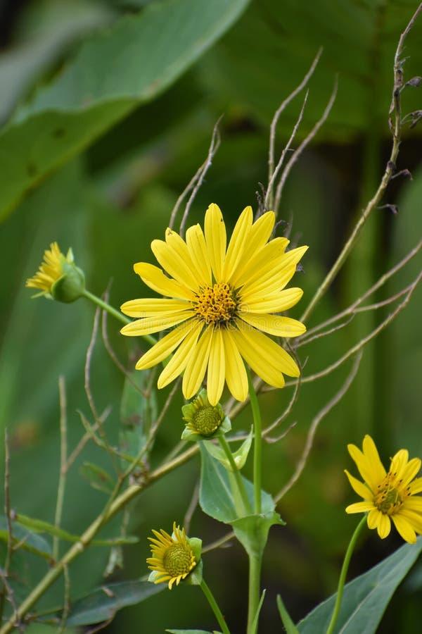 - kwiaty do żółtego obraz royalty free
