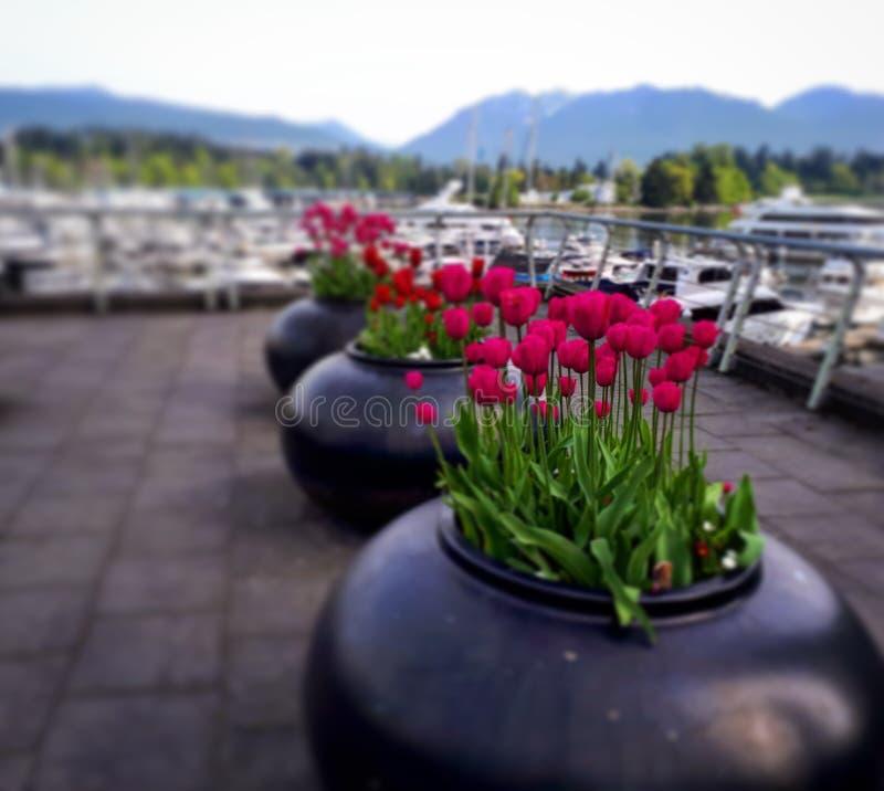 Kwiaty dokami obrazy royalty free
