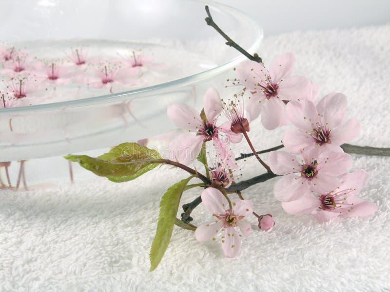 kwiaty domów litte spa różowego zdjęcie stock
