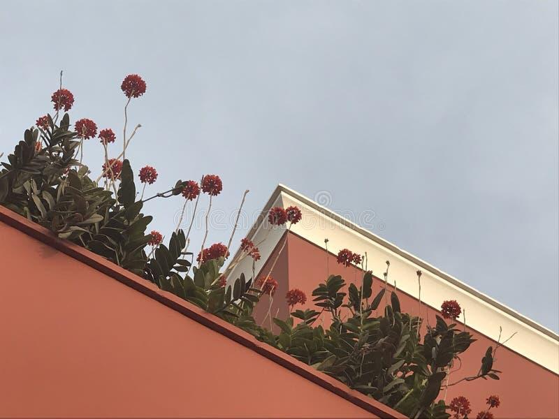 Kwiaty dosięga dla nieba zdjęcie royalty free