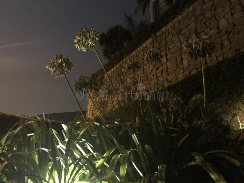 Kwiaty dosięga dla nieba obrazy stock