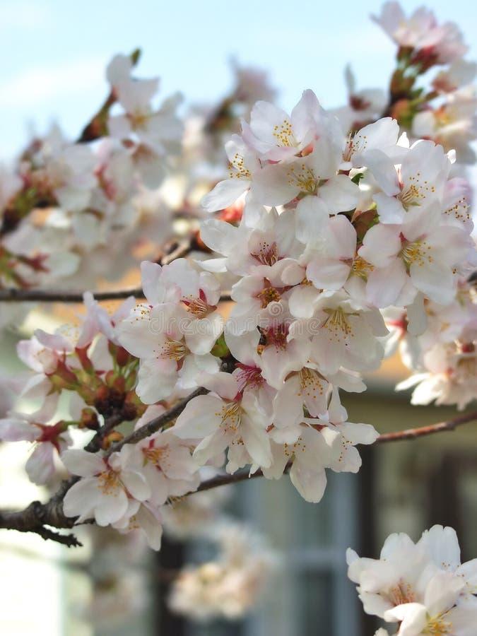 kwiaty drzewa fotografia stock