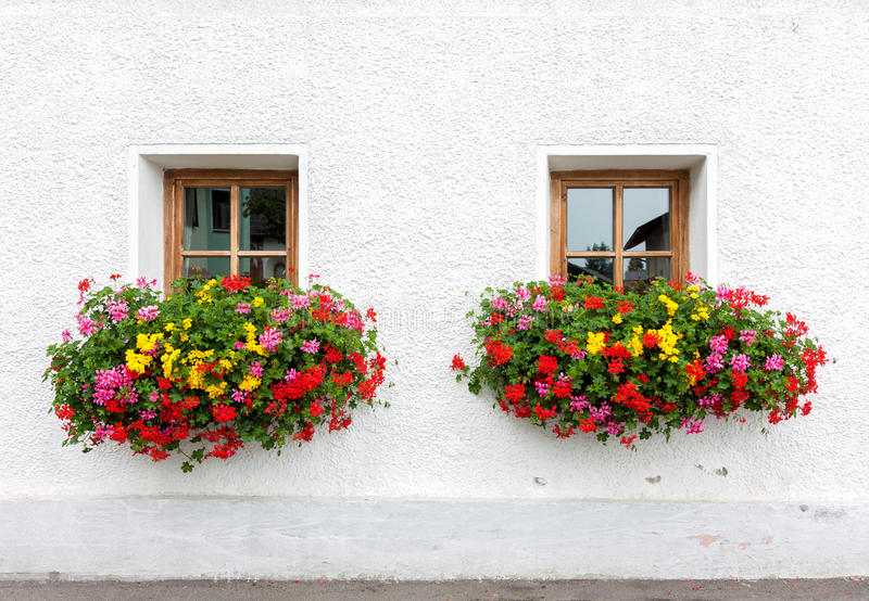 kwiaty dwa okno zdjęcie royalty free