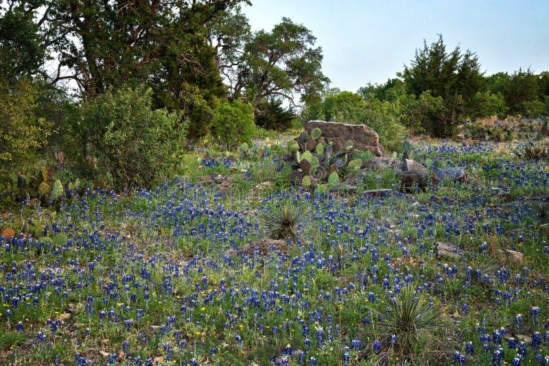 Kwiaty dzikie fotografia royalty free